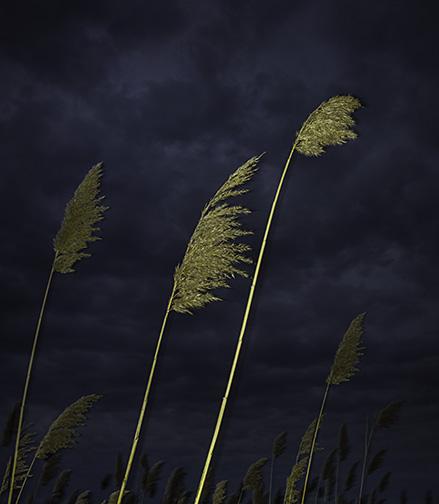 Weeds_at_IsaakWalton