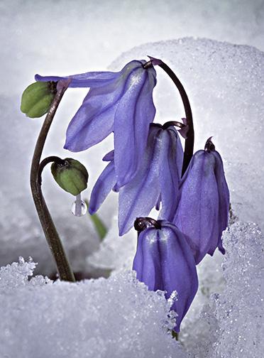 Spring Flower11